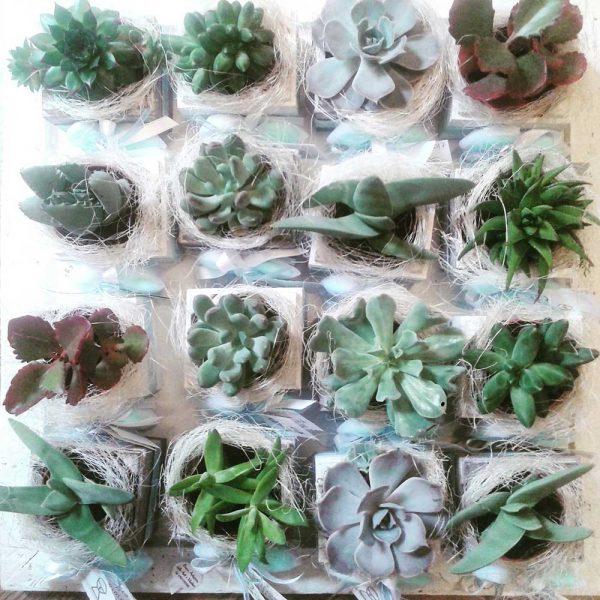 Cassettine con succulente